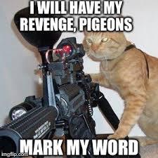 Gun Meme