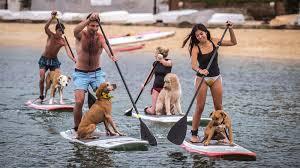 surf board dogs