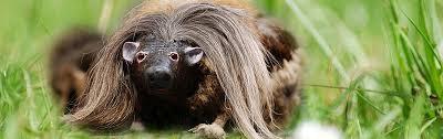 haggis animal